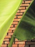 The brick texture Royalty Free Stock Photo