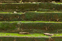 Brick texture. Close-up brick texture with moss Royalty Free Stock Photo