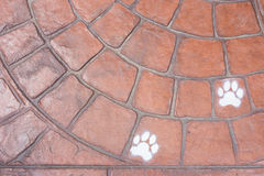 Brick texture. The foot paw on brick texture Stock Images