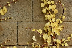 Brick texture. With yellow leaves stock photo