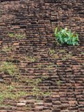 Brick and tree. Royalty Free Stock Photography