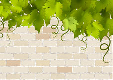 Brick vintage background with vine Stock Photography