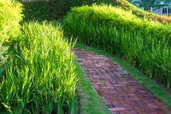 Brick walk way on green grass in morning Royalty Free Stock Images