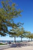 Brick walkway along the lake. A brick walkway lined with trees along the lake Stock Photos