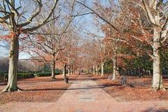 Brick walkway in autumn royalty free stock image