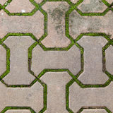 Brick Walkway Lined With Moss Up Nicely,texture,background Royalty Free Stock Photography