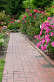 Brick walkway with rose plants Stock Photo