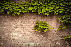Free Brick Wall Royalty Free Stock Photography - 11541237