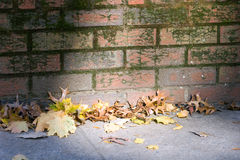 Brick Wall. Leaves in the Sunlight royalty free stock photography