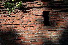 Brick wall. With an apple branch royalty free stock images