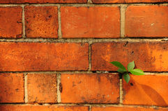 Brick wall. Old bricl wall,. over 100 years old royalty free stock images