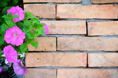 Brick wall. The old brick wall and the flowers Stock Photography