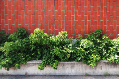 Brick wall. With green leaves Stock Photography