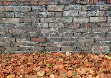 Brick Wall And Autumn Leaves Stock Photography