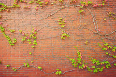Brick wall background with autumn leaves Royalty Free Stock Image