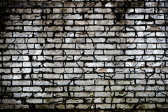Brick wall - background Stock Images