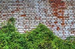 Brick wall background and green flora. Stylish brick wall background and fresh green flora stock photo