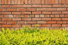 Brick wall and bramble Royalty Free Stock Photography