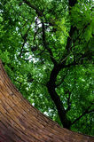 Brick wall and branches of a tree Stock Photo