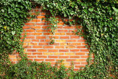 Brick wall covered by ivy royalty free stock photo