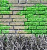 Brick wall covered with moos Stock Photos