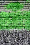Brick wall covered with moos Royalty Free Stock Photos