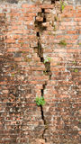Brick wall with a crack and plants Royalty Free Stock Photos