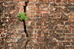 Brick wall with a crack and plants Stock Image