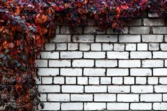 Brick wall with decorative grapes abstract background royalty free stock photo