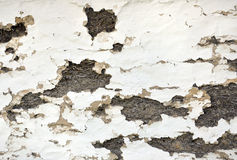 Brick wall with destroyed plaster Royalty Free Stock Photography