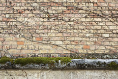 Brick wall with dry branches Royalty Free Stock Images