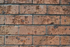 Brick wall with erosion Royalty Free Stock Image