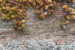 Brick wall by fall Stock Photography