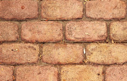 Brick wall, fence. Colorful brick wall background texture Stock Image