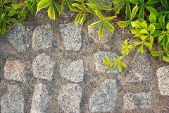 Brick wall or fence with wild grapes. Filter Stock Images