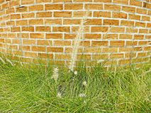 Flower grass. Brick wall and flower grass Royalty Free Stock Photography