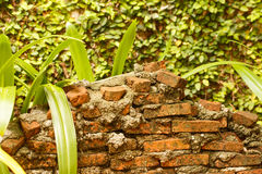 Brick wall in front of ivy on wall Stock Photo