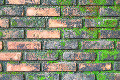 Brick wall full with green moss Royalty Free Stock Images