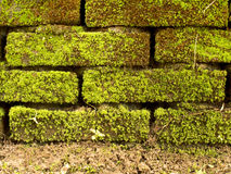 Brick wall full with moss and ground Stock Photo