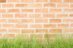 Brick wall and grass Stock Images
