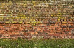 Brick wall with grass and daisies stock image