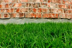 Brick Wall and Grass Royalty Free Stock Image
