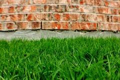 Brick Wall and Grass Royalty Free Stock Image