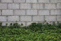 Brick wall grass. Royalty Free Stock Photo