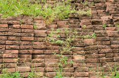 Brick wall with grass Royalty Free Stock Photography