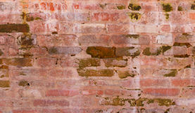 Brick wall with green algae Stock Photography