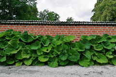 Brick wall with green big large plants Stock Photos