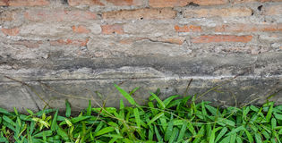 Brick wall with green hedge Royalty Free Stock Image