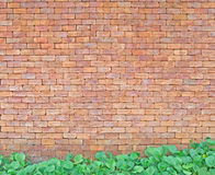 Brick wall with green leaf Stock Photo