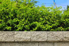 Brick wall and green leaf royalty free stock image